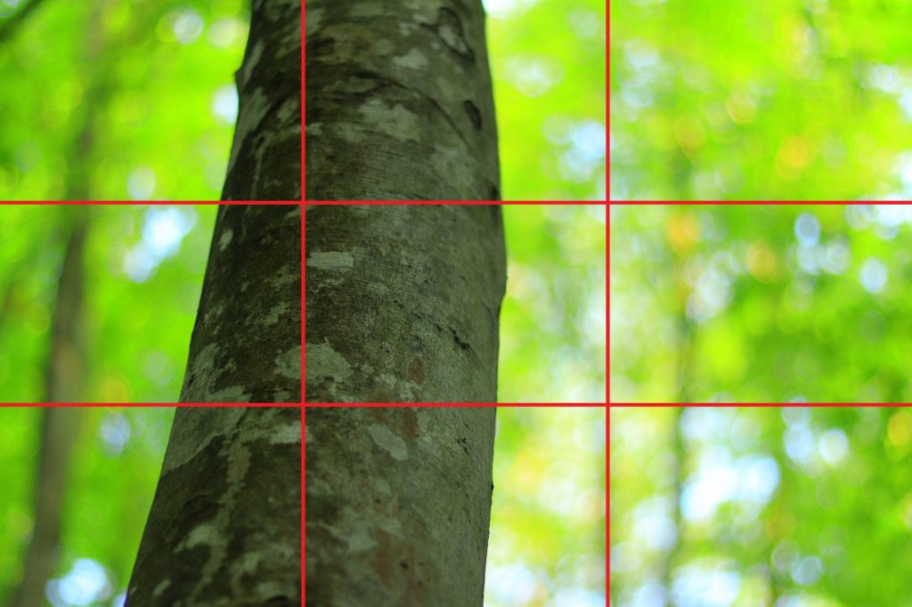 ぶなの木(三分割その2)