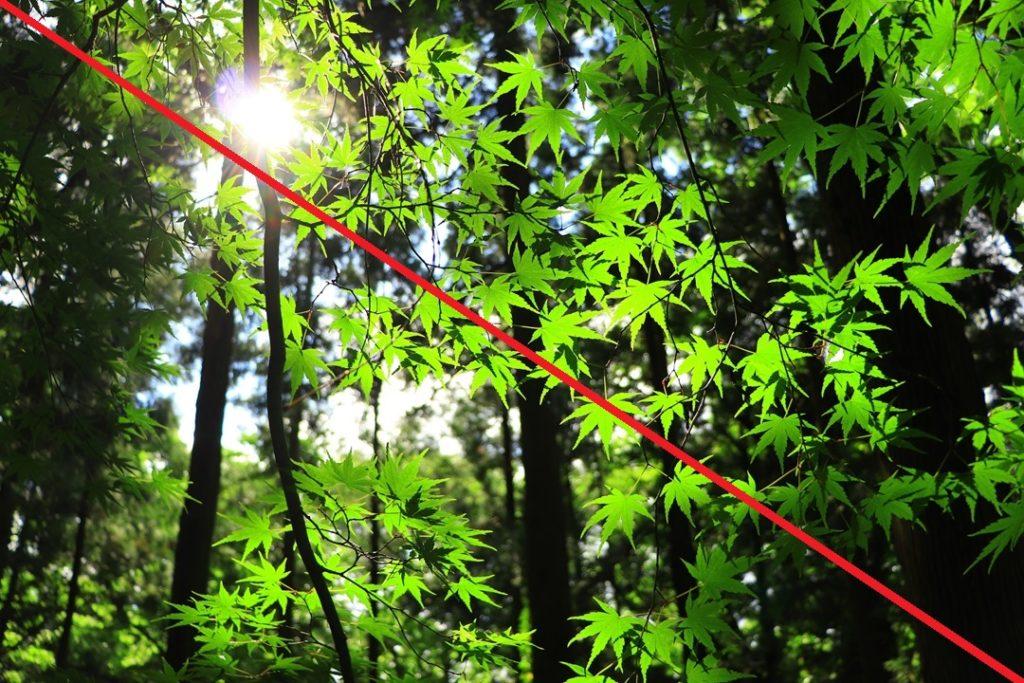 緑のもみじ(対角線)