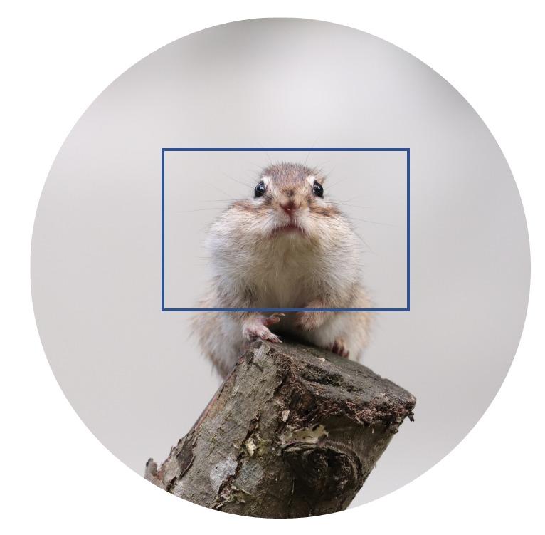 イメージサークル(APS-C)